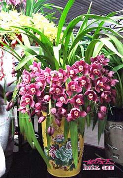 花店的花和花的名字-蕙兰 花行天下鲜花店 全球最大的鲜花销售平台,先送花后付款,100